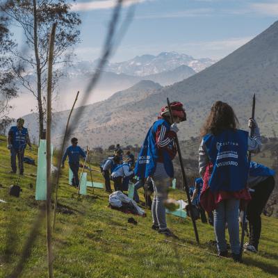 330 árboles fueron plantados en la reforestación SANTIAGO+B en Cerro Renca