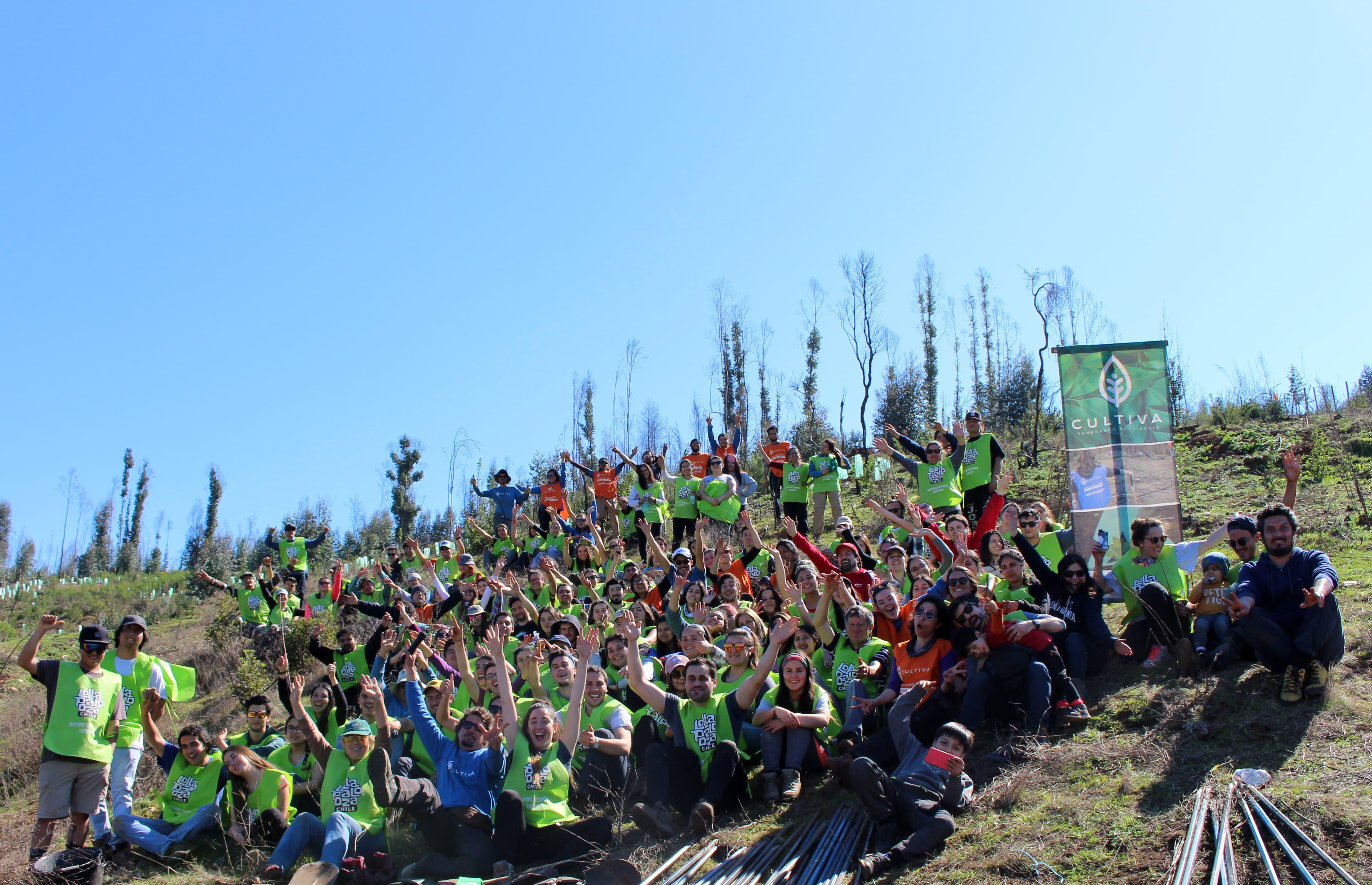 Voluntarios reforestan cinco hectáreas en la región del Maule tras recaudación de fondos en Lollapalooza