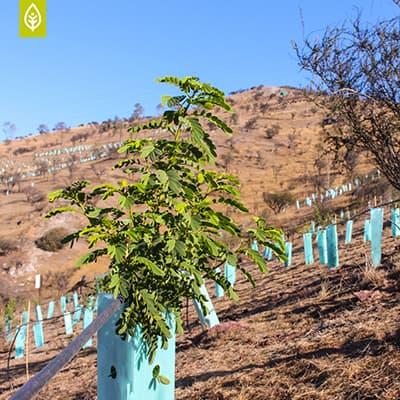 Crecen nuestros Árboles Nativos